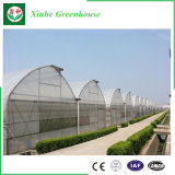 Invernadero de la película plástica del Multi-Palmo del bajo costo de China para la agricultura