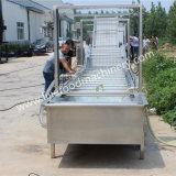 Colada de las pasas y máquina de proceso/arandela y secador secos de la azufaifa