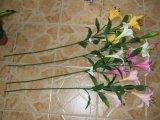 Plantas e flores artificiais de lírio Qh-D7009