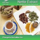 Extrait naturel d'ortie de 100% (4 : 1, 10:1, 1%, 5% Acis silicique)