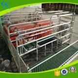 Оборудование клетей питомника гальванизированная кровать засева свиньи