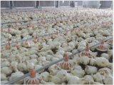 Chambre de poulet en acier intense d'armature à vendre