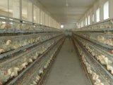 養鶏場のためのInnaerの工場鶏のケージの層の家禽