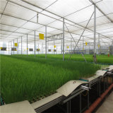 Serre chaude agricole en verre Hidroponica de Venlo /Polycarbonate/Plastic