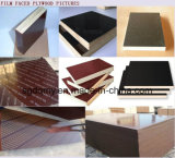 La base de la cosechadora dos veces presionó la madera contrachapada hecha frente película para el mercado de Dubai