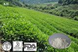 Extrato de Chá Verde natural de alimentação 99% L-Theanine