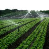 Fertilizzante composto della polvere dell'amminoacido sui raccolti organici