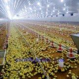 يشبع مجموعة يضبط دواجن حظيرة تجهيز لأنّ دجاجة مولّد