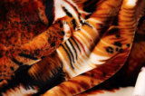 Flanela impressa do poliéster/tela coral do velo - 14001-6 2#