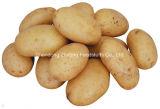 Китайская свежая картошка для ехпортировать