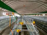 Automatic poulette Chick Cage d'équipement pour les élevages de volailles