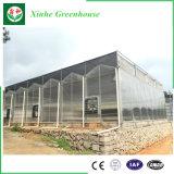 Agricultura barata y de alta calidad/invernadero comercial de la hoja de la PC