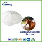 Freeze Dried Horse Lactobacillus Probiotics Powder Diarrhea Relief