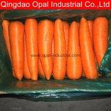 Frais de bonne qualité de la Carotte / Nouveau fournisseur de carottes fraîches de récolte