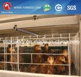 卵の層の鶏のための電流を通されたケージ