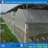 Estufa hidropónica da vertente da película do preço de fábrica do sistema China para a agricultura