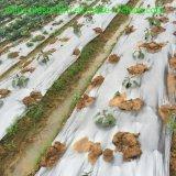 20mic 25mic 30mic 35mic anti-UV Sliver película preta/ Fractius Capinas película preta para cobertura de solo