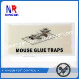 Coller toute la trappe plate de colle pour des souris et des insectes