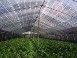 Tela de pára-sol como Green House Net