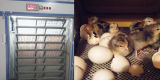 Complètement automatique numérique Industriel 800 Incubateur d'oeufs de canard Écloserie de la Zambie