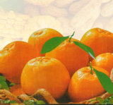Carnes frescas de Mandarin laranja (Fujian Logam)