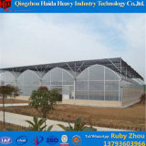 Túnel de alta qualidade de filme plástico Estufa com sistema hidrop ico