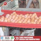 Type neuf type cage d'échelle de poulet d'oeufs