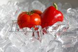Máquina de hielo comestible del tubo de Koller una toneladas por el día (TV10)