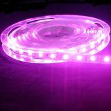 Indicatore luminoso flessibile esterno/dell'interno di DC12V/24V di 120LED/M SMD5050 LED di strisce per la decorazione