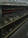 Carne y equipo de la avicultura