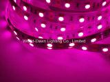 Alto indicatore luminoso di striscia flessibile di luminosità 12V 24V SMD LED per colore dentellare