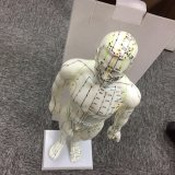 Corpo inteiro manequim Masculino Muscular Acupuntura Modelo do corpo humano