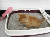 Tofu-Katze-Sänfte mit Kaffee-Geruch