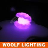 LED Conch 빛이 LED Conch 빛에 의하여/방수 소형 LED는 점화한다