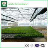 Serra di verdure della pellicola economica per il pomodoro