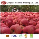 Nueva cosecha de manzana Fuji fresco de alta calidad