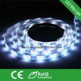 Bande 60LED/M IP65 imperméable à l'eau de 5050 SMD DEL