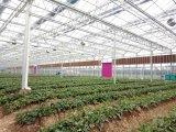 Rilievo di raffreddamento per evaporazione del sistema di raffreddamento della serra del pollame per l'azienda agricola