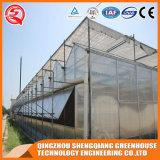 Multi-Überspannung Stahlrahmen-Aluminiumprofil-Polycarbonat-Blatt-Gewächshaus für Gemüse