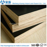 Contrachapado impermeable Contrachapado / Tableros de Formply / Contrachapado PelÃcula para Cemento Concreto