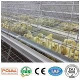 Le matériel de ferme avicole/poulet de Pullut met en cage le système