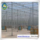 Venloの屋根のトンネルのガラス温室の商業温室の製造業者