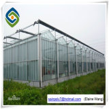 Fabricante comercial da casa verde da estufa de vidro do túnel do telhado de Venlo