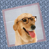 애완 동물 강아지 패드