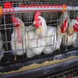 Автоматическая система клетки цыпленка для фермы цыпленка цыплятины