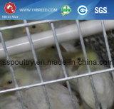 Alimentador de PVC Comedero para aves de corral de jaulas en batería a Argelia por un-3L90)