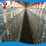 ベストセラーの家禽挿入システムの養豚装置の低価格販売のための自動ブタの挿入システム
