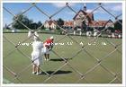 Conexión de cadena del campo de golf que cerca el acoplamiento