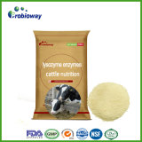 Additifs alimentaires bovins respectueux de l'environnement d'animal d'enzymes de bétail de lysozyme