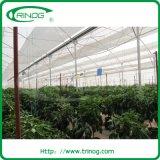 Ein Frame Research Greenhouse für Wasserkultur